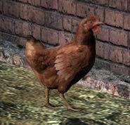 Hen (brown)