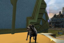 Jade Everfall (Dog)