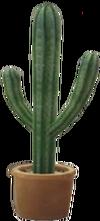 Dead rising Cactus