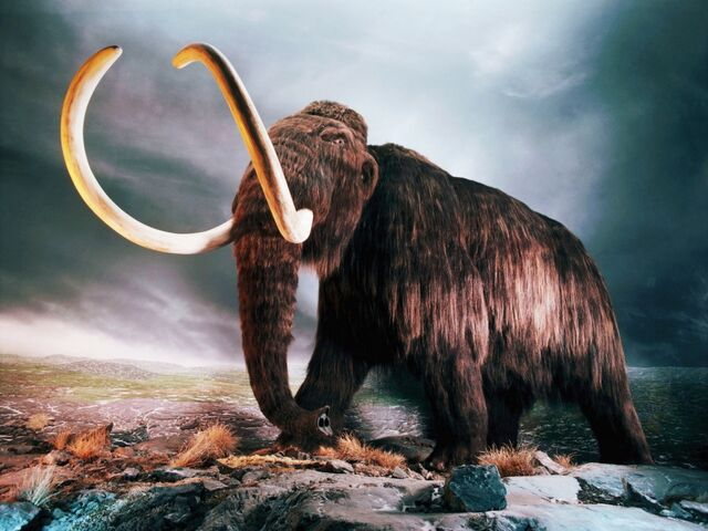 File:Woolly mammoth-1024x768.jpg