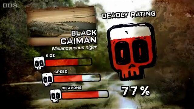 File:Ptp dr black caiman.jpg