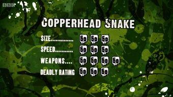 S3 DR copperhead