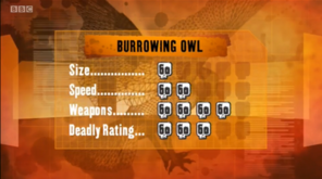 S1 DR burrowing owl