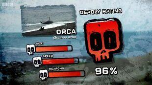 PTP DR killer whale