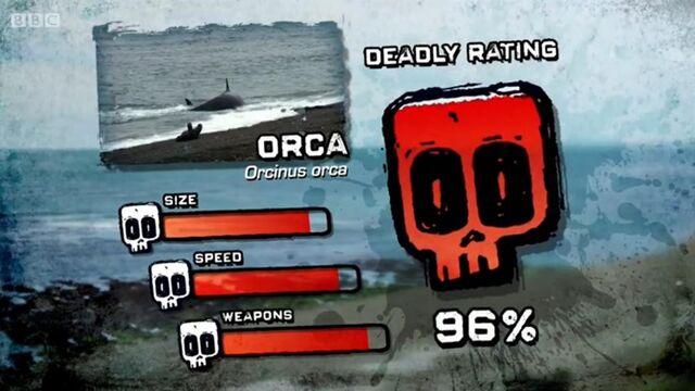 File:PTP DR killer whale.jpg