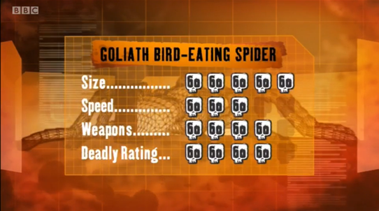 File:S1 DR bird spider.png