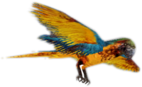 Zombie parrot blue CTYD