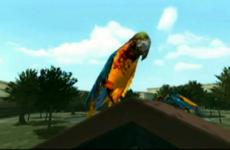 Zombie parrots IGN
