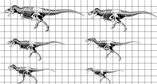 File:Tyrannosauridae.png
