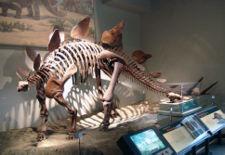 File:225px-Stego fieldmuseum.jpg