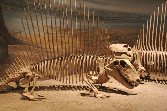 File:Dimetrodon pair.jpg