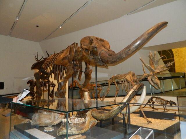 File:Mastodon.JPG