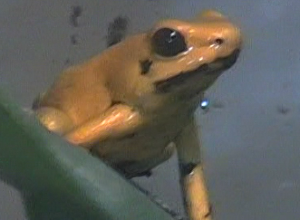 File:Taurus the Toad.png