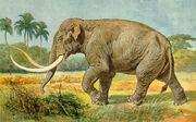 Mammuthus imperator