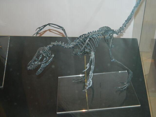 File:Bambiraptor.JPG
