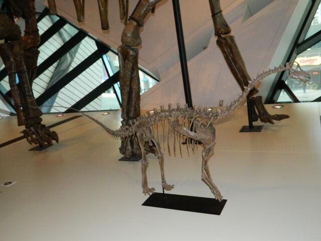 File:Baby Brachiosaurus.JPG