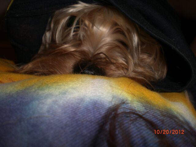 File:Mcmuffin in my hoodie..jpg