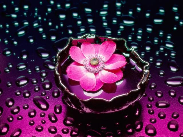 File:Lotus-flower.jpg