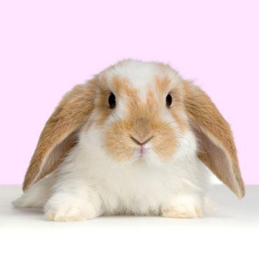 File:Bunny!.jpg