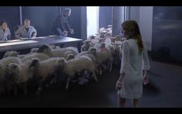 Sheepatevaluation