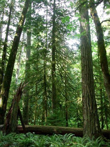 File:Euylize-Forest.jpg
