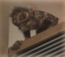 Redlip's Monkey