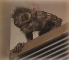 File:Redlip's Monkey.PNG