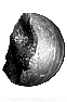 File:Chunk of Faintstone.png