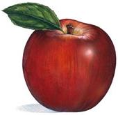 File:Apple2.jpg