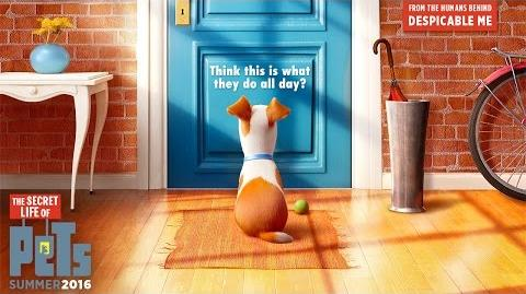 The Secret Life of Pets/Videos