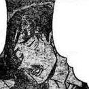 Danchiro Shirata manga