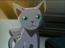 Eri's Cat, Goro