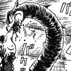 Jinmen eats Illuge