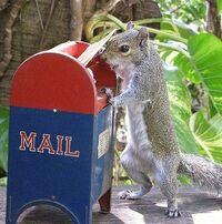 Mailbox Squirrel
