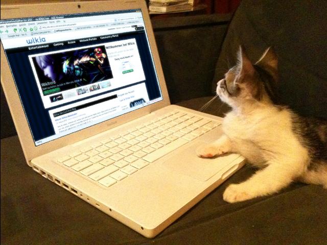 Datei:Notebook-Katze.png
