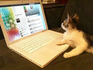 Wikia Twitter Katze