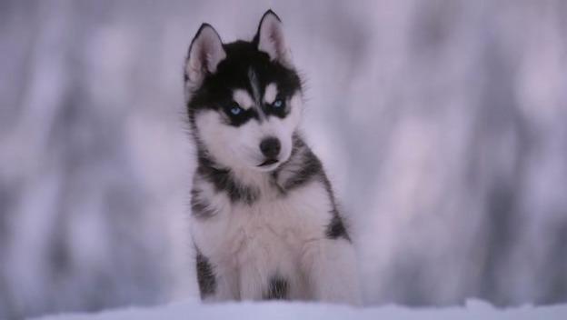 Datei:Snow-buddies-disneyscreencaps.com-2450.jpg