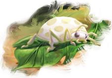 Whiteladybug