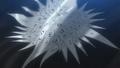 Black Order Emblem.PNG