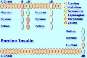 Porcineinsulin