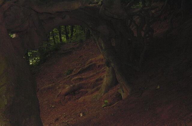 File:Black-black-forest.jpg