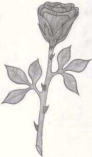 Schwarze Rose.jpg