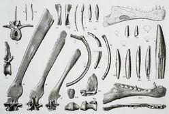 Spinosaurus holotype