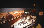 NMNH fossil halls, circa 1963 2