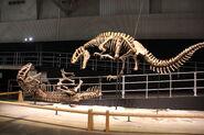 Laika ac Dino Kingdom 2012 (7882288828)