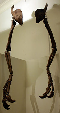 File:200px-Deinocheirus mirificus.jpg