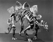 Paleontology Exhibit, Stegosaurus- Armored Dinosaur