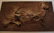 DilophosaurusROM1