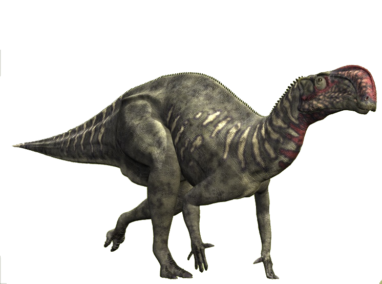 Ouranosaurus  Facts and Pictures
