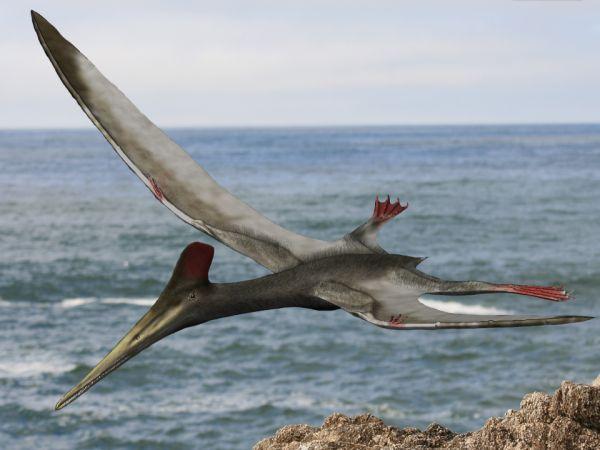 File:Pterodactylus BW.jpg